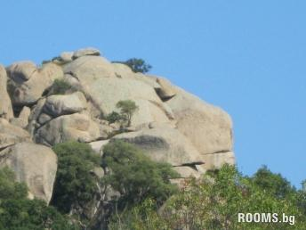 Lions Head, Picture
