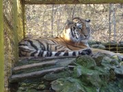 The Zoo in Stara Zagora, Picture 3