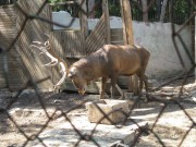 The Zoo in Stara Zagora, Picture 4