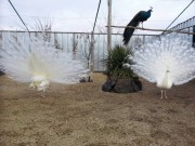 "Municipal animal control facility - ""Peacock"", Picture 4"