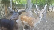 Zoo Gorica, Picture 3