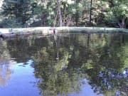 Fishpond - Dobrinishte, Picture 2
