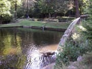 Fishpond - Dobrinishte, Picture 3