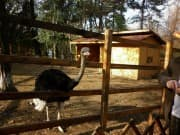 Zoo - Aytos, Picture 3