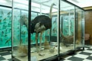 National Museum of Natural History - Sofia, Picture 2
